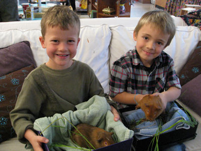 picture of four year olds with their classroom guinea pigs