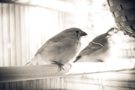 picture of two birds